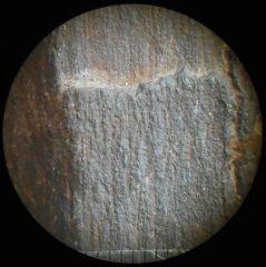 Jurassic (Bothonian) petwood