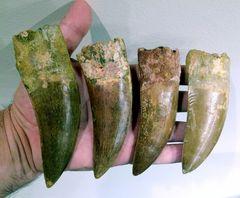 Carcharodontosaurus big handful