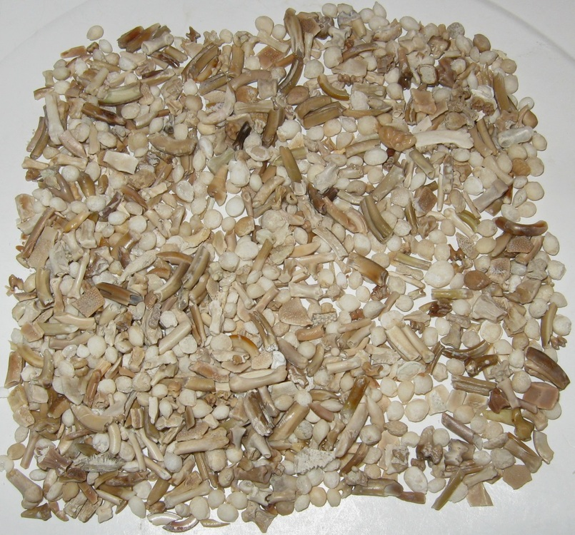 Specimens Front Road Area Front one gallon B 2a r.jpg