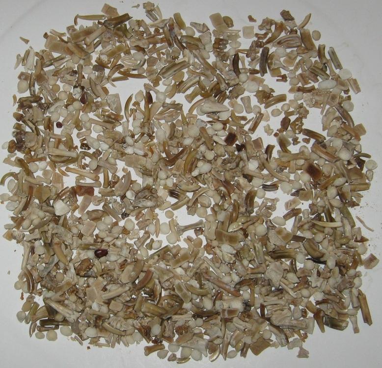 Specimens Wash Area Left one gallon B r.jpg