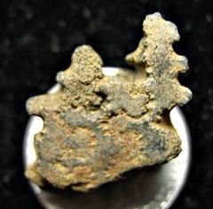 Ammonite chambers fragment- Monmouth Co., NJ.IMG_5372.JPG