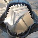 SharkLover24/7