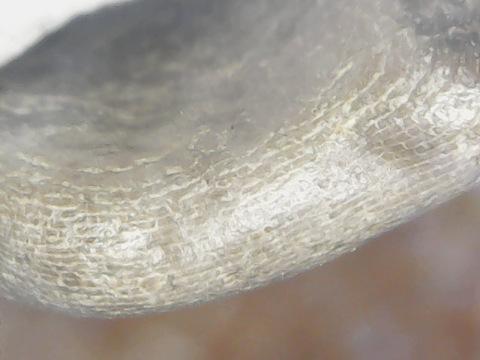 possible Pterodactyl bone.jpg