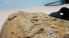 Petrified Wood?