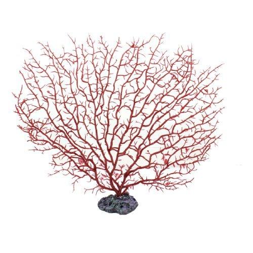 fan coral.jpg