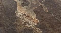 Dendrite psuedofossil