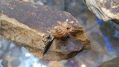 Trilobiten  Rupachtal (14).jpg