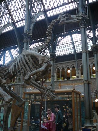 Natural History Museum Oxford dino.JPG