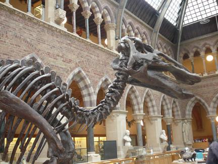Natural History Museum Oxford Duck Billed Dinosaur.JPG