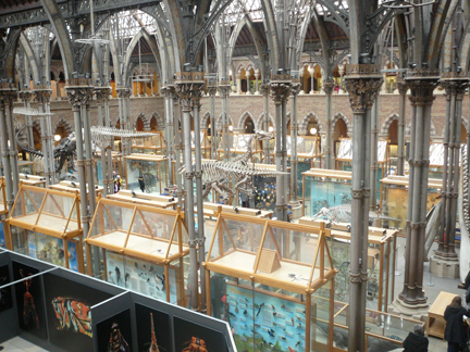Natural History Museum Oxford from the Cafe 1.JPG