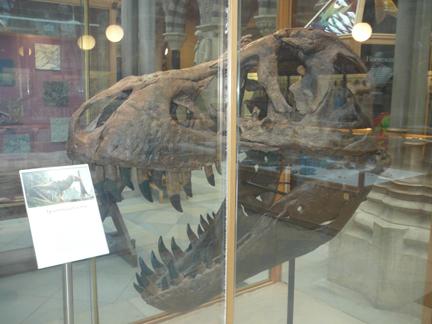 Natural History Museum Oxford T Rex Skull.JPG