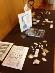 Display of Delaware Fossils