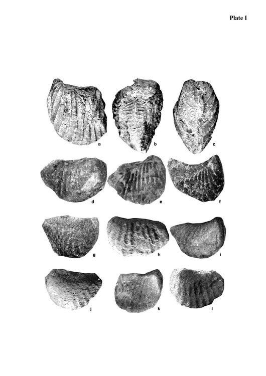 Pterotrigoniascabra2006_1.thumb.jpg.59f9c2c8e1836cafe3e2317f552fda8b.jpg