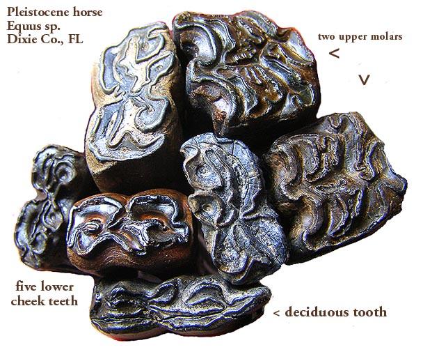 horseequusgroup.JPG