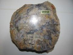 Coprolite - polished side.JPG