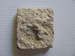 Archimedes Bryzoan.JPG