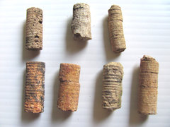 Crinoid Stems of the Mississippian Period A.JPG