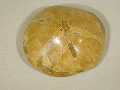 Sea Urchin Fossil - Madagascar a.jpg