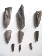 Belemnite Fossils, Germany.jpg