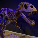 Cowboy Paleontologist