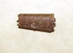 Baculite Fossil Segment Fossil a.jpg