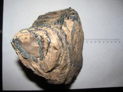 Mammuthus columbi Mammoth tooth 1.JPG