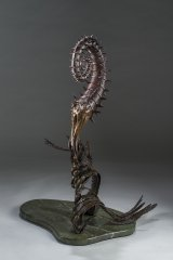 Heteromorphic Ammonite Left Front View