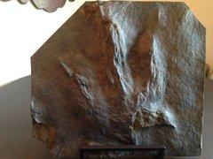 Eubrontes Dinosaur Track, South Hadley, Mass