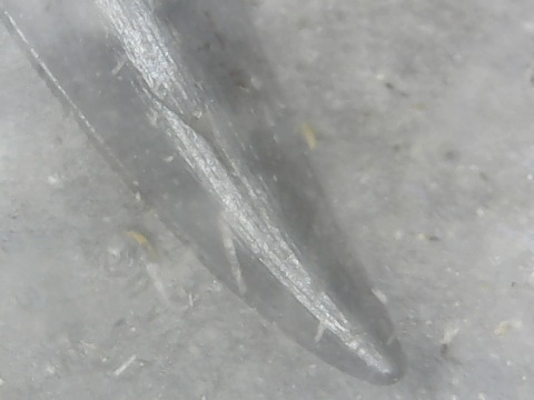 reptile tooth 1 upper end.jpg