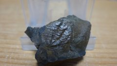 Ampyx linleyensis Trilobite 1.jpg