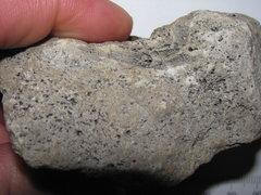 Pycnostylus Coral a1.JPG
