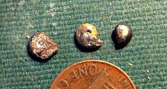 Tiny Goniatites from the Pyrite Bed, Penn Dixie