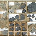 Northernfellsfossils