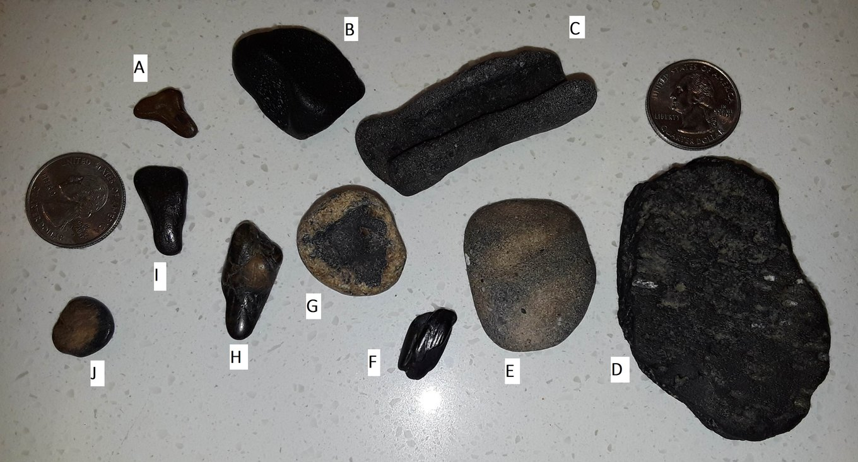 1. Fossils from Venice Beach A-J  LB 1-12-2019.jpg