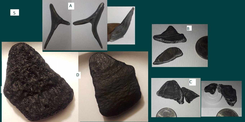 5. Fossils A-D LB 1-12-2019 - 30.jpg