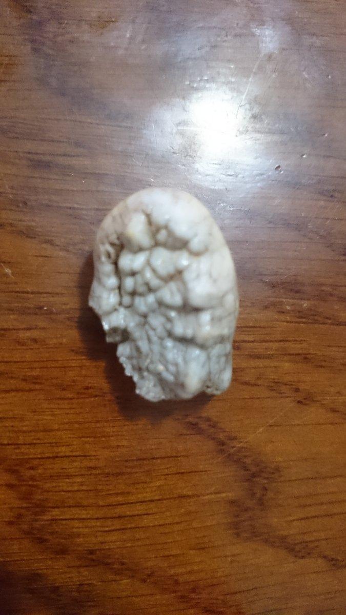 Ice Age Carnivores (Ursus spelaeus - Crocuta spelaea)