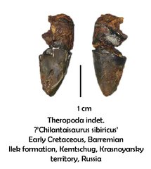"?""Chilantaisaurus sibiricus"""