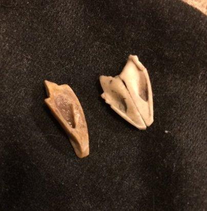 Fossil2-12-19b.jpg