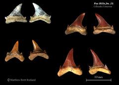 Colorado Cretaceous - Fox Hills