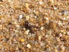 Shark tooth on the sand