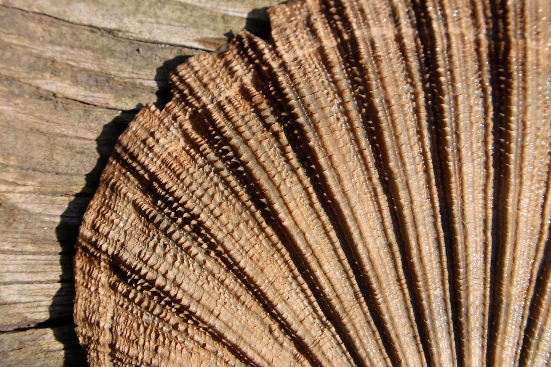 Virginia Miocene