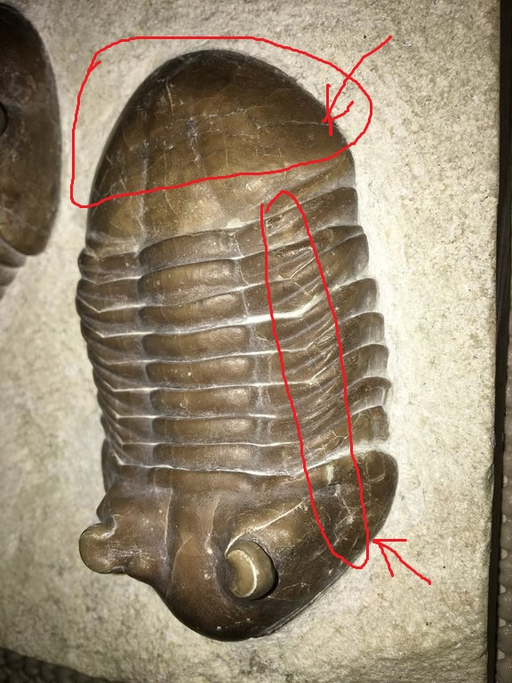 side.thumb.JPG.852b0d62ce6455e59e15949c8feee5fe.JPG
