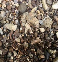 Can you find the shark tooth? (2)