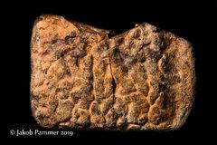 Fossil Armor