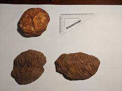 Stromatolite and bioturbated sea floor - Arthur Creek Formation 1.1