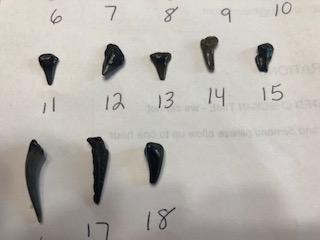 Sharks teeth 2.png