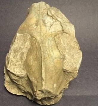 5d59bad811350_fossil7.jpg.29ea175ce0e40d894a2759e9fdf5dbe1.jpg