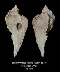 Subpterynotus textilis