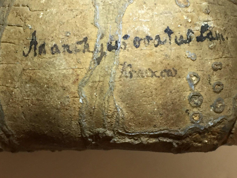 Fossil Script.jpg