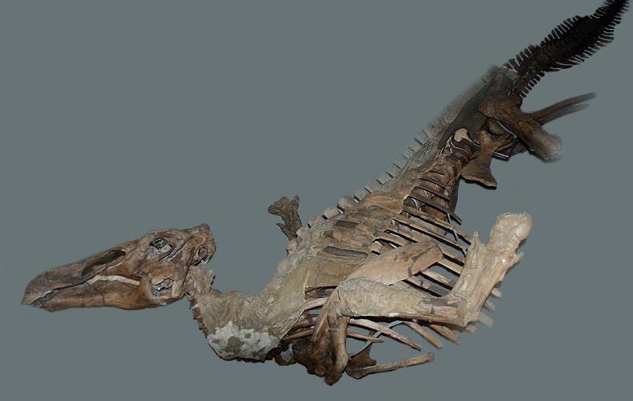 Edmontosaurus-1416.jpg.82e6ad681f21ec30c7e0692495950f6b.jpg